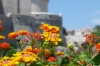 Flowers and the city wall in Dubrovnik