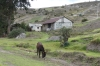 Donkey, on the road from Chimborazo to Alausí EC