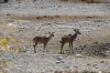 Kudu at the Aus waterhole, Etosha, Namibia