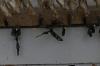 Butterfly pupa, Mariposario (butterfly farm), Mindo EC