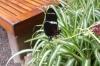 Butterflies at the Mariposario (butterfly farm), Mindo EC