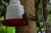 Hummingbirds at Mariposario (butterfly farm), Mindo EC