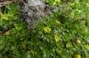 Grasses on Cruz Loma, EC