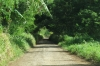 Rough roads in Tonga (vido attached)
