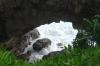 Hufangalupe (The Pigeon's Doorway), natural coral bridge and steep cliffs, Tongatapu Island, Tonga