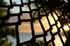 Sunset through the hammock, Fafa Island, Tonga