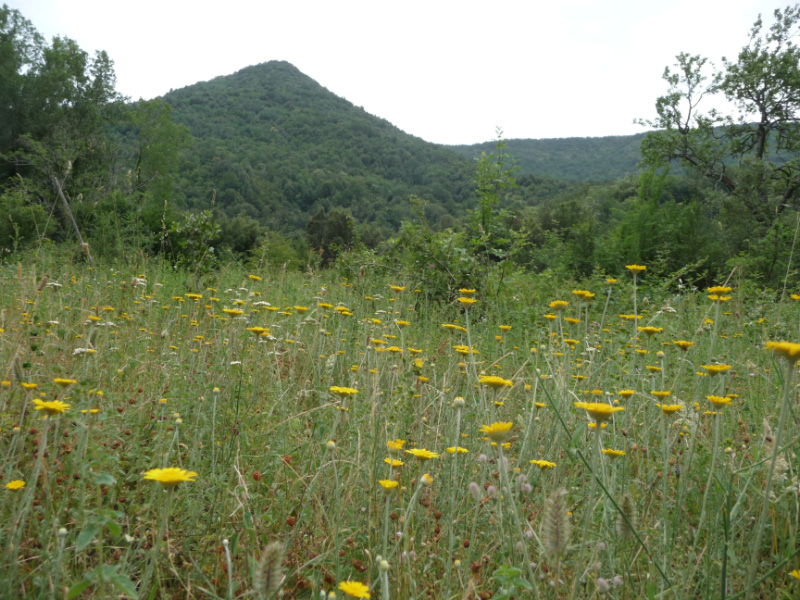 Wild flowers at Farma Torrente (river)