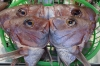 Fish heads at Omi-cho Market, Kanazawa, Japan