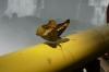 Butterfly on yellow rail, Iguaçu Falls, BR