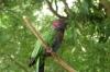 Parrots, Bird Park, Foz de Iguaçu BR