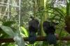 Black-fronted Piping-Guan. Bird Park, Foz de Iguaçu BR