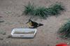 Toucan. Bird Park, Foz de Iguaçu BR