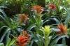 Bromeliads. Bird Park, Foz de Iguaçu BR