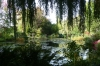 Monet's lily pond, Giverny