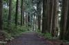 Ancient Cedar Avenue between Hakone Machi-Ko and Moto Hakone-Ko, Lake Ashi, Japan