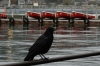 Crow and red boats on Lake Ashi, Hakone, Japan