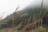 Silver Grass, Sengokuhara, Hakone, Japan