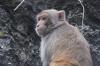 Monkeys at Hang Sung Sot (the Secret Cave)