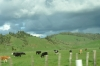 the road from Waitomo to Taupo NZ