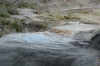 Te Puia indigenous park and thermal springs, Rotorua NZ