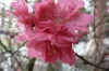 Blossom, Hanoi VN