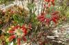 Harold Porter National Botanical Gardens. Betty's Bay, South Africa