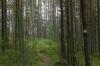 Lammassaaren Forest Walk near Imatra FI