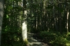 Kemeri National Park (floodplain forest trail) near Jūrmala LV