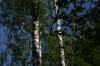 Kemeri National Park (dry forest trail) near Jūrmala LV