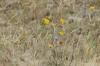 Nagliy Nature Reserve (the Dead Dunes), Curonian Spit LT