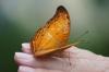 Butterfly Park, Kuala Lumpur