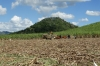 Harvesting the sugar cane, La Romana DO