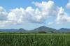 Sugar cane fields, La Romana DO
