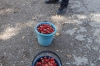 Buying strawberries on the side of the road, near the Burana Tower. They were deliciously sweet.