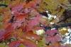 Autumn leaves. Rukh Ordo museum cum theme park, Cholpon-Ata
