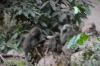 Baboons, Lake Manyara Park, Tanzania