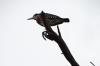 Birds on Lake Naivasha, Kenya