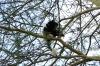 Colobus Monkey, Lake Naivasha, Kenya