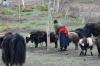 Tibetan family in Sangke Grasslands, near Xaihe, Tibet