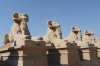 Avenue of the Rams, entrance to the Karnak Temples, Luxor EG