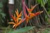 Flowers at Palácio Rio Negro, Manaus BR