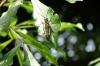 Caterpillar larvae. Manuel Antonio National Park