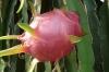 Tropical fruit garden near Can Tho