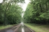 Natchez Trace Parkway in the rain. MS