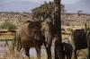 Elephants, Samburu National Park, Kenya