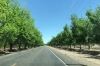 Pecan orchards in Mesilla NM USA