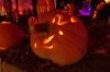 Jack-o-Lantern Blaze, van Cortlandt Manor, Croton-on-Hudson NY