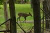 A walk along Ashokan Lake, NY
