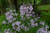 Wild Flowers, Ithaca, NY