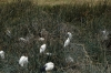 Various birds in the Hippo Pond, Ngorongoro Crater, Tanzania